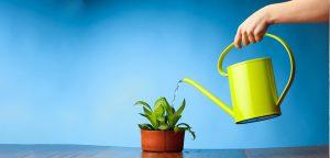 نحوه آبیاری گیاهان آپارتمانی